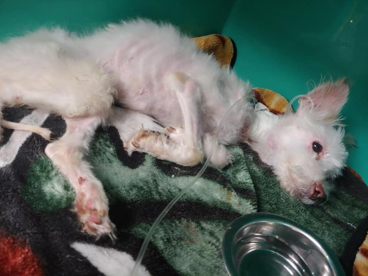 Starving pup rescued from dumpster doing better