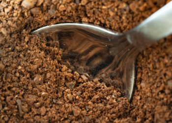 Check out these interesting ways to reuse coffee grounds