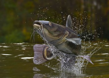 The Best Freshwater Fish To Catch This Summer