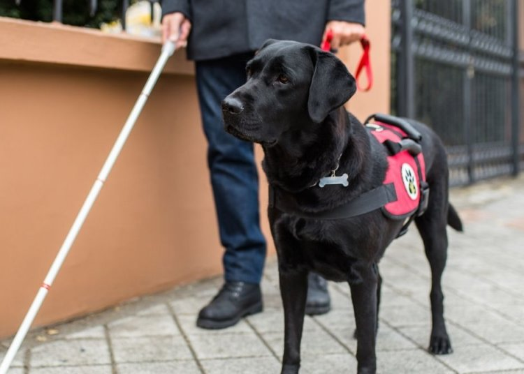 Different Types of Service Dogs for People With Disabilities